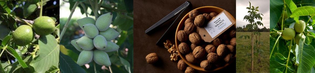 Warwickshire Walnuts & Trees